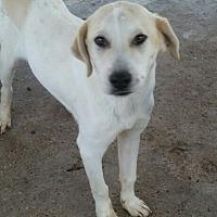 Adopt A Pet :: biggen - springtown, TX
