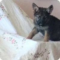 Adopt A Pet :: Almond 'Joy' - Holly Hill, SC