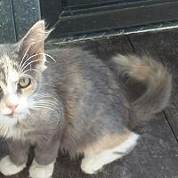 Adopt A Pet :: Ella - Mims, FL