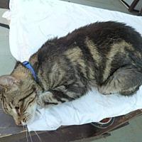 Adopt A Pet :: Buddy - Calimesa, CA