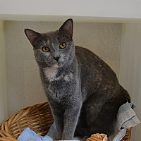 Adopt A Pet :: Julie - Broadway, NJ