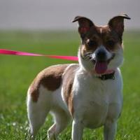 Adopt A Pet :: Ansley - Fairfield, OH
