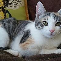 Adopt A Pet :: Sola - Oxnard, CA