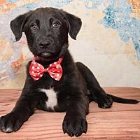 Adopt A Pet :: 780 - Aurora, CO
