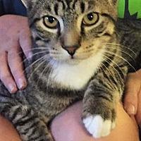 Adopt A Pet :: Ellery - Chattanooga, TN