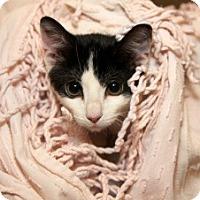 Adopt A Pet :: Dewey - Cleveland, OH