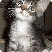 Adopt A Pet :: Captain Jack - Chandler, AZ
