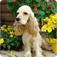 Adopt A Pet :: Dusty - Sugarland, TX