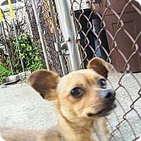 Adopt A Pet :: Prince - West Bloomfield, MI