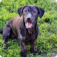 Adopt A Pet :: Wilma - Fort Riley, KS