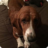 Adopt A Pet :: Fred - Columbia, SC