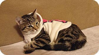 Domestic Shorthair Cat for adoption in Parkton, North Carolina - Samantha