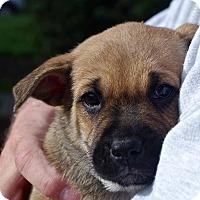 Adopt A Pet :: Bing*ADOPTION PENDING* - Mill Creek, WA