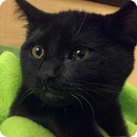 Adopt A Pet :: Black Bart & Ebony - Scottsdale, AZ