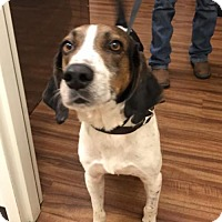 Adopt A Pet :: Eddie - Glen St Mary, FL