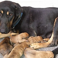 Adopt A Pet :: Masie - Miami, FL