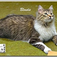 Adopt A Pet :: Blondie - Albuquerque, NM