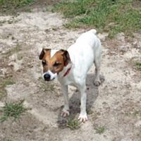 Adopt A Pet :: Skip in Biloxi, MS - Austin, TX