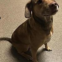 Adopt A Pet :: Spartacus - Sanford, FL