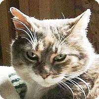 Adopt A Pet :: Daisy - Port Angeles, WA