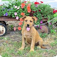 Terrier (Unknown Type, Medium) Mix Puppy for adoption in Bedminster, New Jersey - SANDIE
