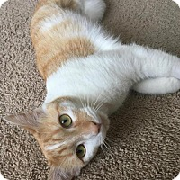 Adopt A Pet :: Ember - New Albany, OH