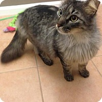 Adopt A Pet :: Slater - Tallahassee, FL