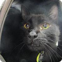 Adopt A Pet :: Money - Irving, TX