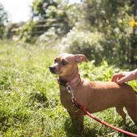 Adopt A Pet :: Topanga**Bonded with Corey** - Brunswick, ME
