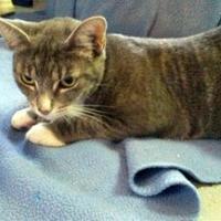 Adopt A Pet :: Lilly Meniteaue - Brooksville, FL