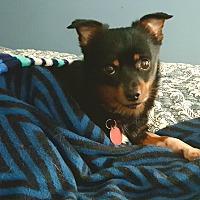 Adopt A Pet :: Spanky - Andalusia, PA