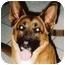 Photo 1 - German Shepherd Dog Mix Dog for adoption in El Segundo, California - Ginger