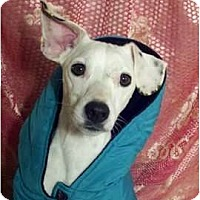 Adopt A Pet :: Jax - Niceville, FL