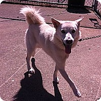 Adopt A Pet :: Walter - Peru, IN