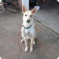 Adopt A Pet :: Piper - Homewood, AL
