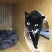 Adopt A Pet :: Mama Mieka - Brooklyn, NY