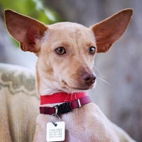 Adopt A Pet :: Doe - El Cajon, CA