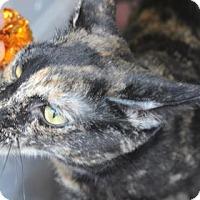 Adopt A Pet :: Brittany - Tucson, AZ