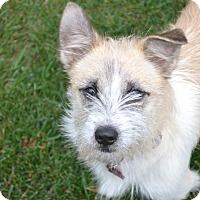 Adopt A Pet :: Bindi - Upper Marlboro, MD