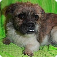 Adopt A Pet :: Wiggles - Phelan, CA