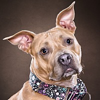 Adopt A Pet :: Lola - West Allis, WI