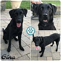Adopt A Pet :: Gina - Kimberton, PA