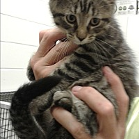 Adopt A Pet :: Claire - Barnwell, SC