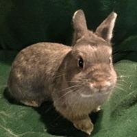Adopt A Pet :: Arabella - Waynesboro, VA