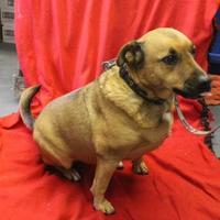 Adopt A Pet :: Claudia - Delaware, OH