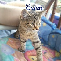Adopt A Pet :: Owen - York, PA