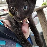 Adopt A Pet :: Havasu - Princeton, MN