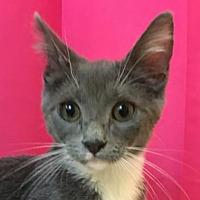 Adopt A Pet :: Mavis - Mesa, AZ