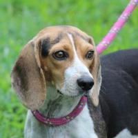 Adopt A Pet :: Freida *Trainee* - Ashland, VA