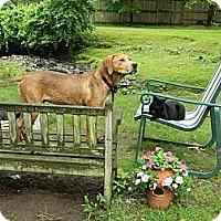 Adopt A Pet :: Jasper - Nanuet, NY